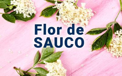 Flor de sauco: beneficios, propiedades y usos