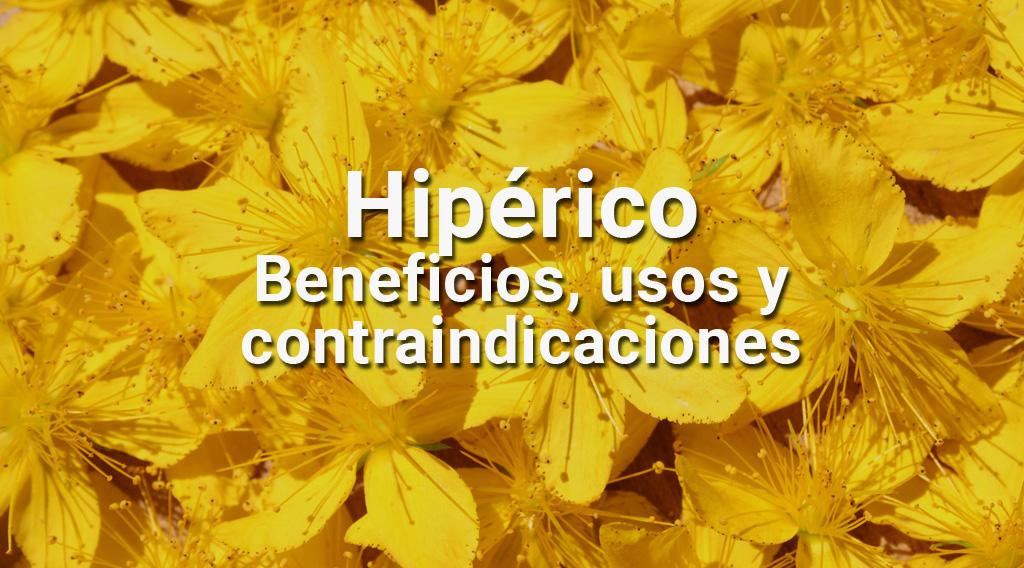 Hipérico: Beneficios, usos y contraindicaciones