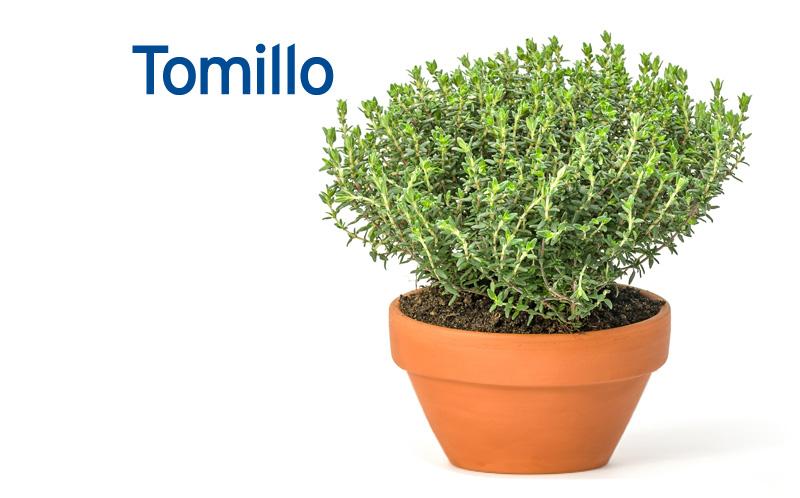 Tomillo: Propiedades y Beneficios